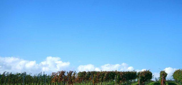 チリワイン造りに最も恵まれた土地「セントラル・バレー地方」の特徴