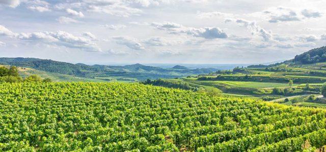 南米最高峰の山がそびえるチリワインの理想郷「アコンカグア地方」